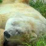 White Bear Z USDJPY 評価・検証・レビュー 安定感抜群の朝スキャル!