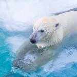 White Bear Z EURJPY 評価・検証・レビュー PF4.46のEAが今なら無料でもらえます!