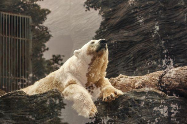 「White Bear Z USDJPY」が無料で使える!